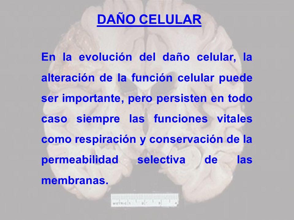 DAÑO CELULAR En la evolución del daño celular, la alteración de la función celular puede ser importante, pero persisten en todo caso siempre las funci