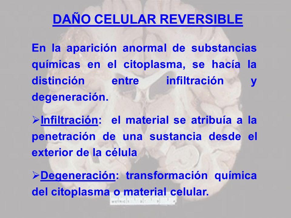 DAÑO CELULAR REVERSIBLE En la aparición anormal de substancias químicas en el citoplasma, se hacía la distinción entre infiltración y degeneración. In
