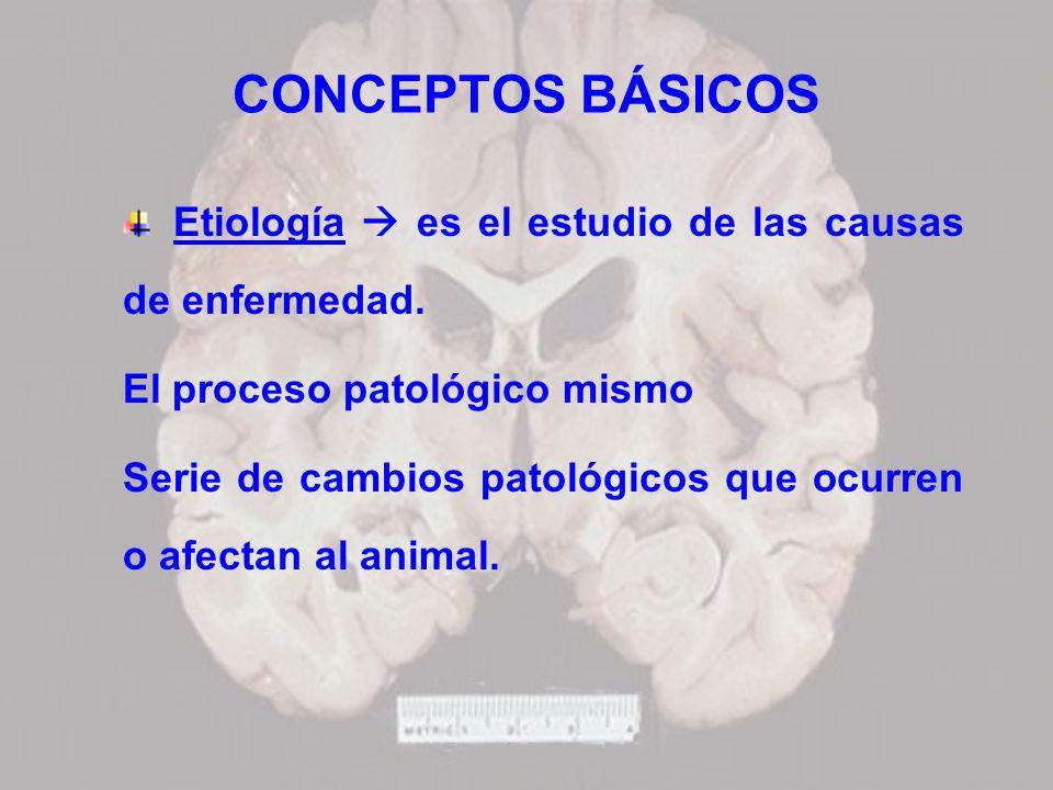 CONCEPTOS BÁSICOS Etiología es el estudio de las causas de enfermedad. El proceso patológico mismo Serie de cambios patológicos que ocurren o afectan