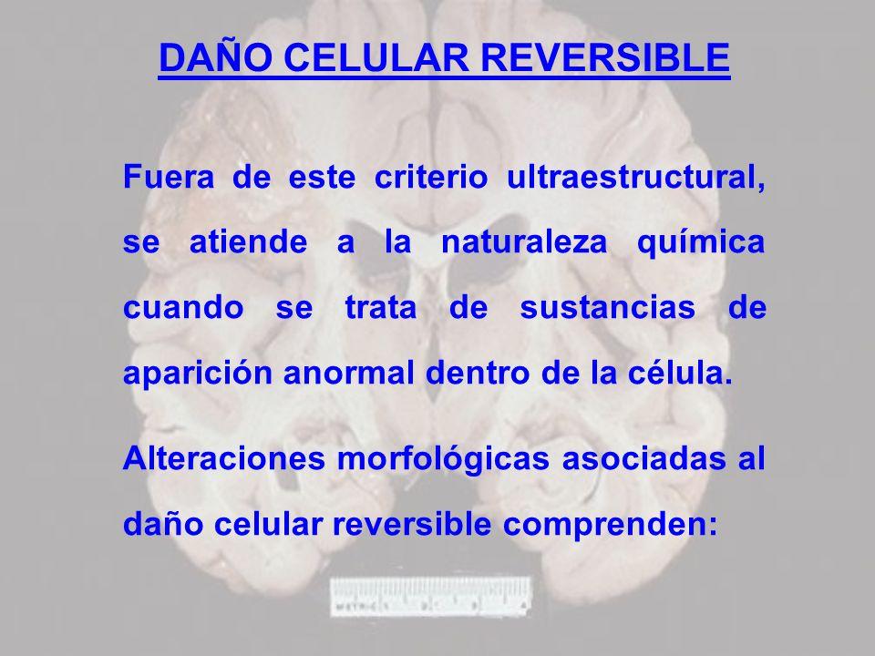 DAÑO CELULAR REVERSIBLE Fuera de este criterio ultraestructural, se atiende a la naturaleza química cuando se trata de sustancias de aparición anormal