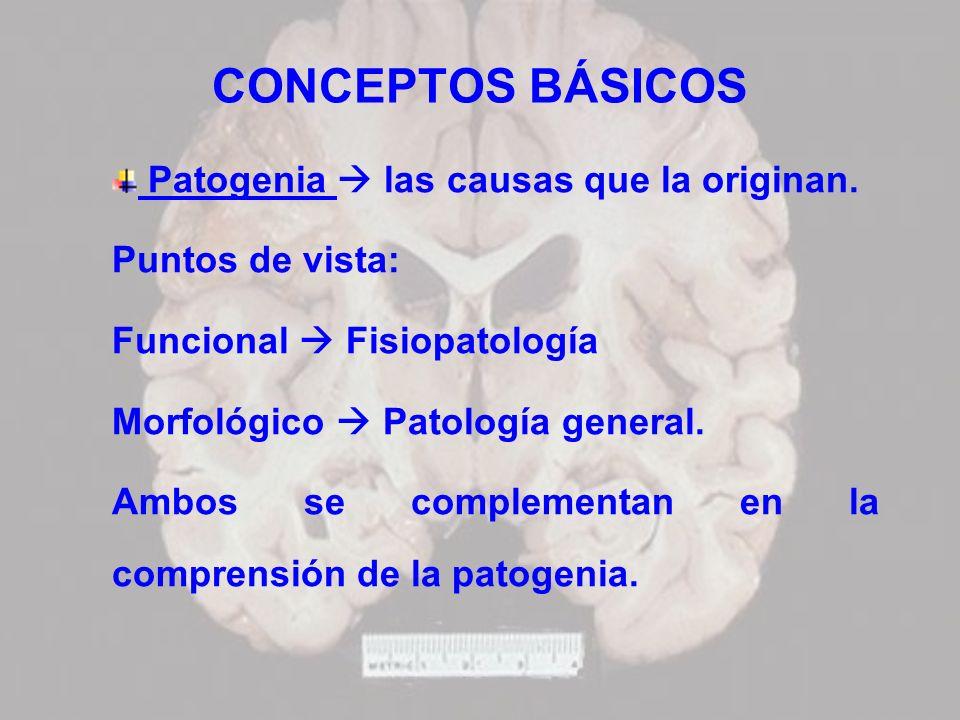 CONCEPTOS BÁSICOS Patogenia las causas que la originan. Puntos de vista: Funcional Fisiopatología Morfológico Patología general. Ambos se complementan