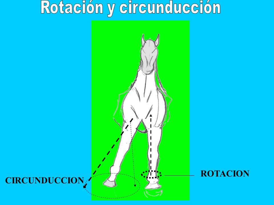 ROTACION CIRCUNDUCCION