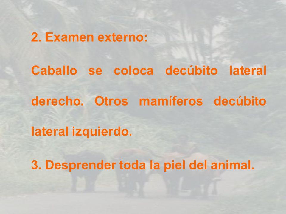 EXAMEN DE ESÓFAGO