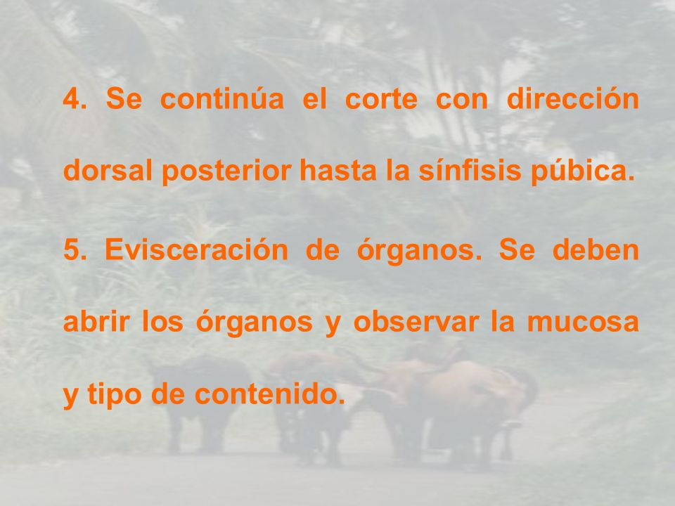 MUESTRA DE HÍGADO