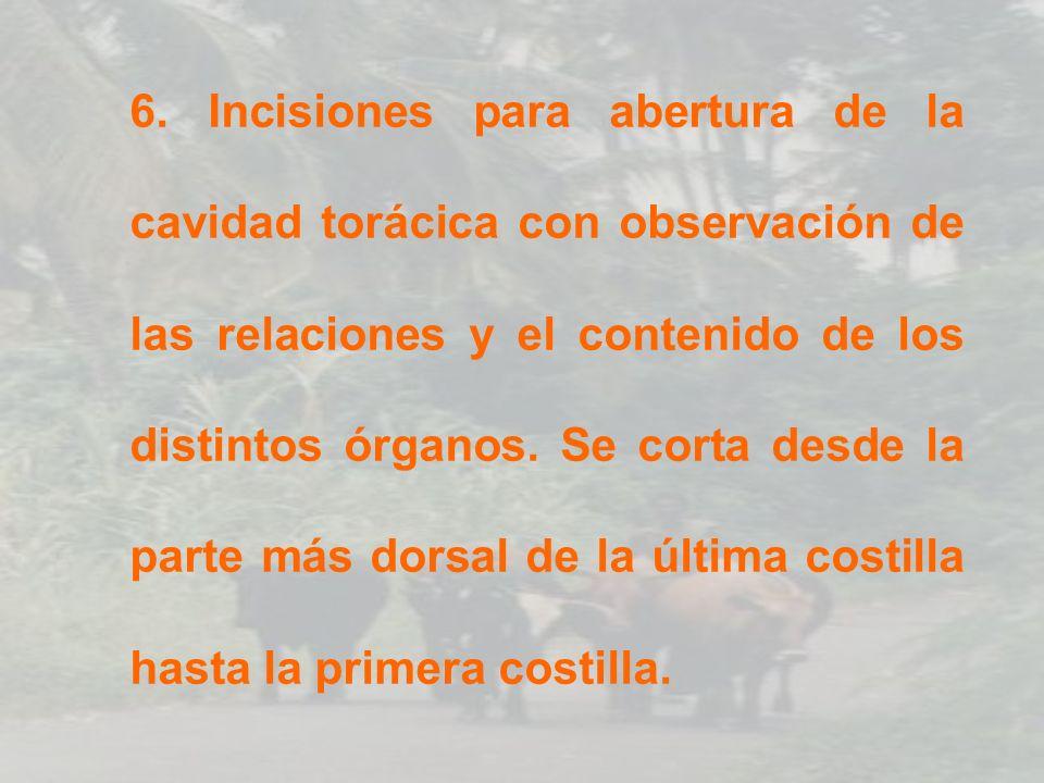 EXAMEN DE BRONQUÍOLOS