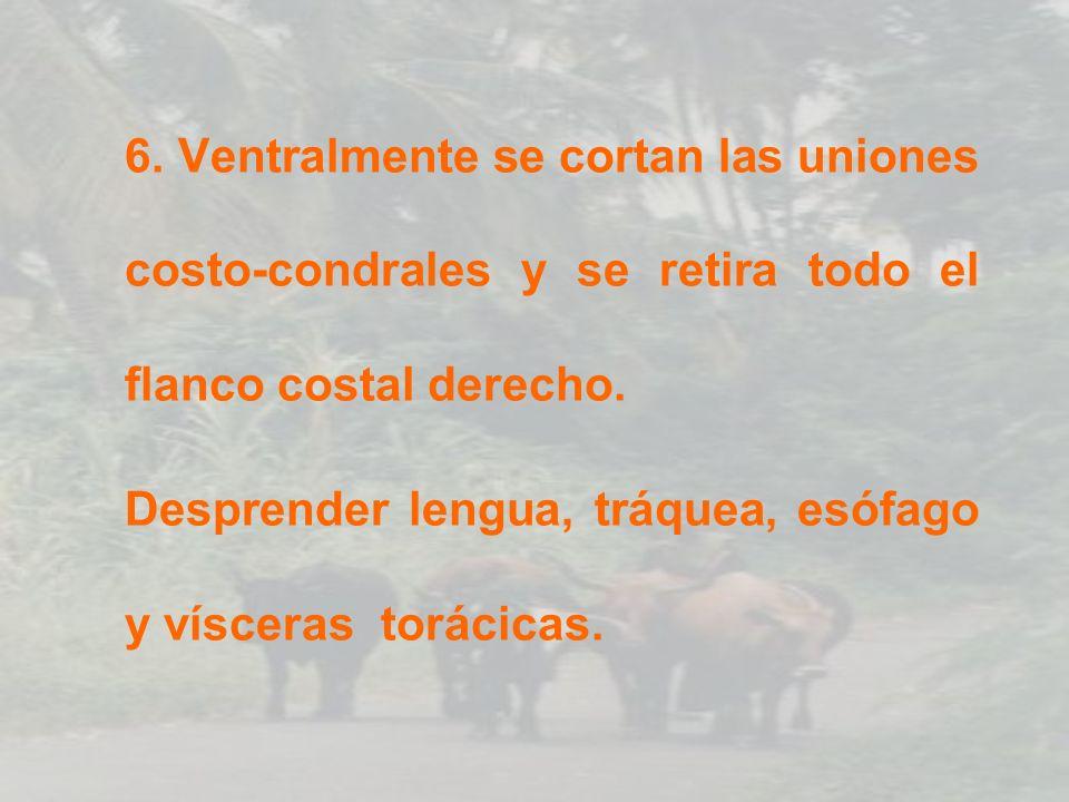 POSICIÓN DE ÓRGANOS