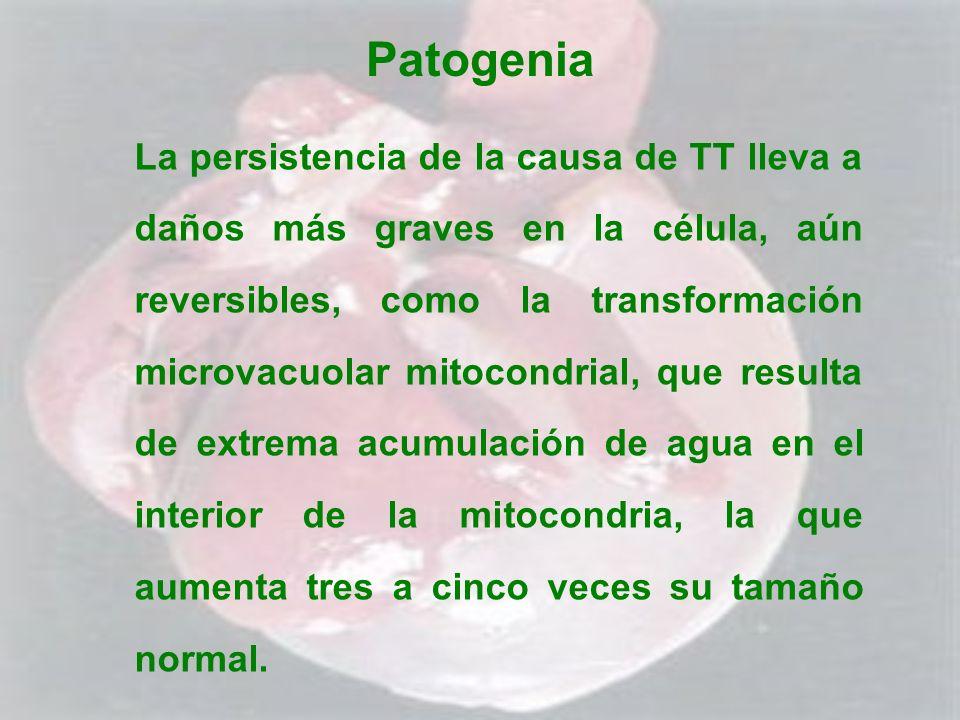 Patogenia La persistencia de la causa de TT lleva a daños más graves en la célula, aún reversibles, como la transformación microvacuolar mitocondrial,