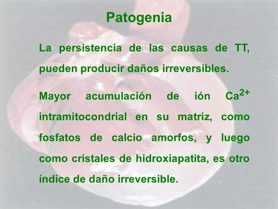 Patogenia La persistencia de las causas de TT, pueden producir daños irreversibles. Mayor acumulación de ión Ca 2+ intramitocondrial en su matriz, com