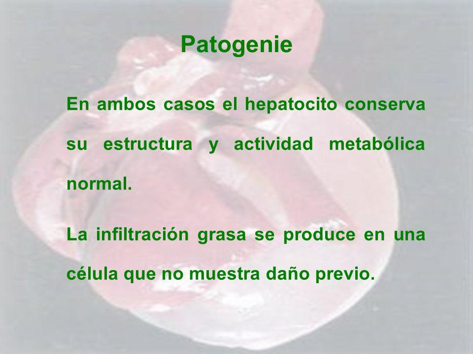 Patogenie En ambos casos el hepatocito conserva su estructura y actividad metabólica normal. La infiltración grasa se produce en una célula que no mue