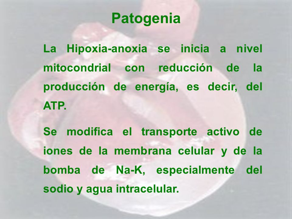 Patogenia La Hipoxia-anoxia se inicia a nivel mitocondrial con reducción de la producción de energía, es decir, del ATP. Se modifica el transporte act