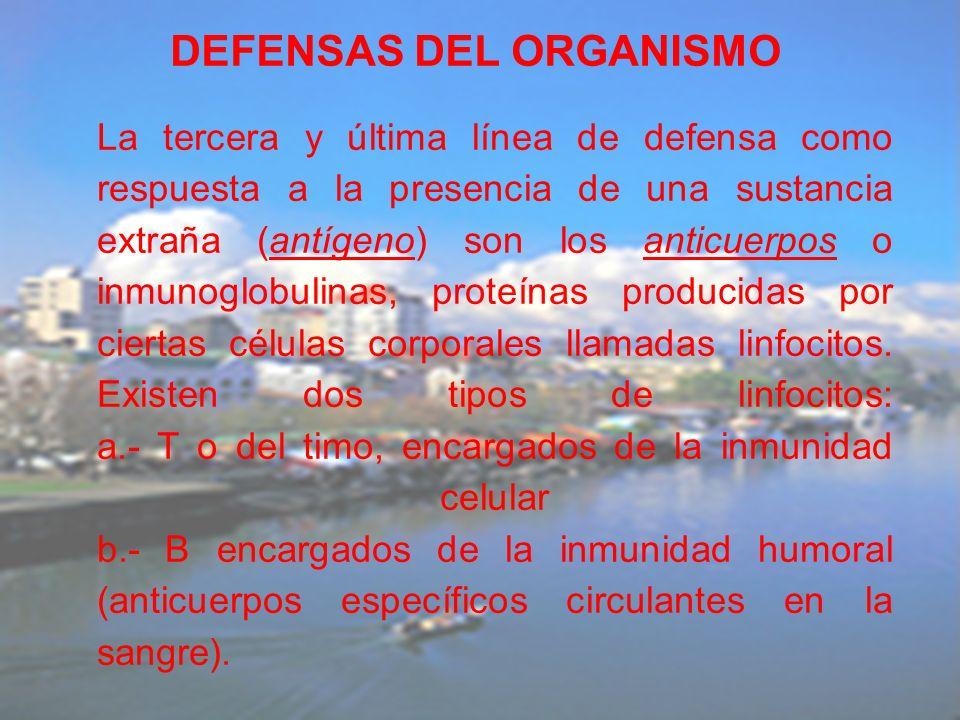 La tercera y última línea de defensa como respuesta a la presencia de una sustancia extraña (antígeno) son los anticuerpos o inmunoglobulinas, proteín