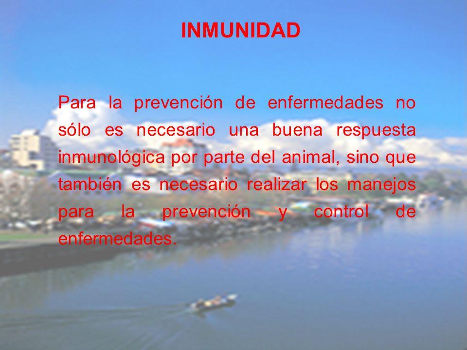 Para la prevención de enfermedades no sólo es necesario una buena respuesta inmunológica por parte del animal, sino que también es necesario realizar