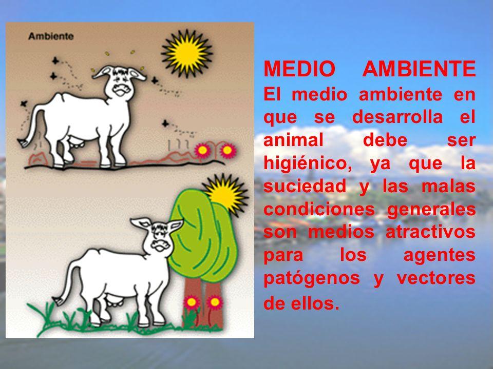 MEDIO AMBIENTE El medio ambiente en que se desarrolla el animal debe ser higiénico, ya que la suciedad y las malas condiciones generales son medios at