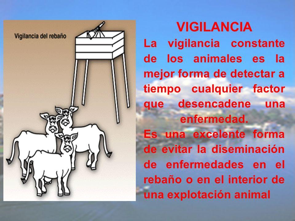 VIGILANCIA La vigilancia constante de los animales es la mejor forma de detectar a tiempo cualquier factor que desencadene una enfermedad. Es una exce