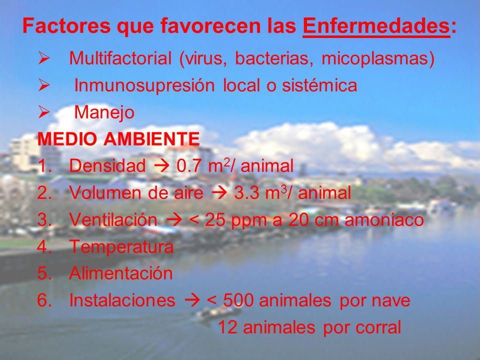 Multifactorial (virus, bacterias, micoplasmas) Inmunosupresión local o sistémica Manejo MEDIO AMBIENTE 1.Densidad 0.7 m 2 / animal 2.Volumen de aire 3