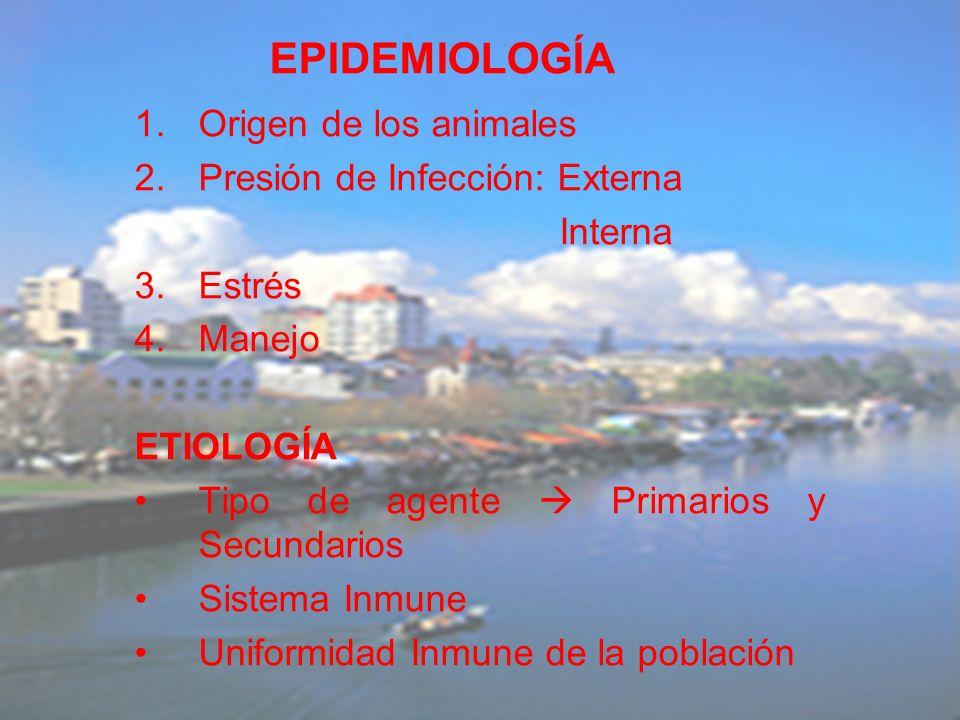 1.Origen de los animales 2.Presión de Infección: Externa Interna 3.Estrés 4.Manejo ETIOLOGÍA Tipo de agente Primarios y Secundarios Sistema Inmune Uni