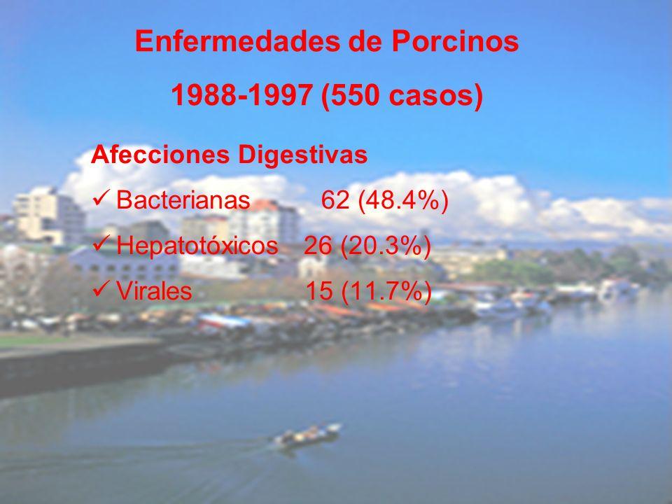 Afecciones Digestivas Bacterianas 62 (48.4%) Hepatotóxicos 26 (20.3%) Virales 15 (11.7%) Enfermedades de Porcinos 1988-1997 (550 casos)
