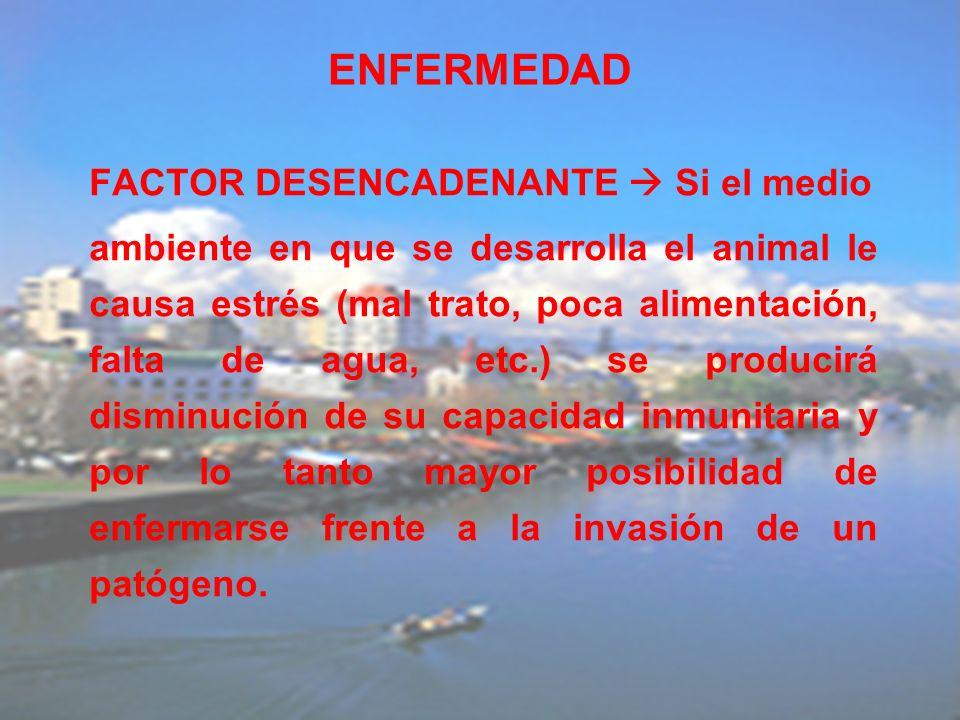 ENFERMEDAD FACTOR DESENCADENANTE Si el medio ambiente en que se desarrolla el animal le causa estrés (mal trato, poca alimentación, falta de agua, etc
