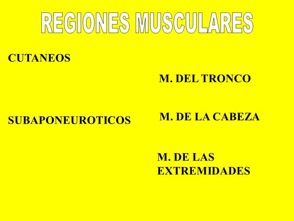 CUTANEOS SUBAPONEUROTICOS M. DEL TRONCO M. DE LAS EXTREMIDADES M. DE LA CABEZA