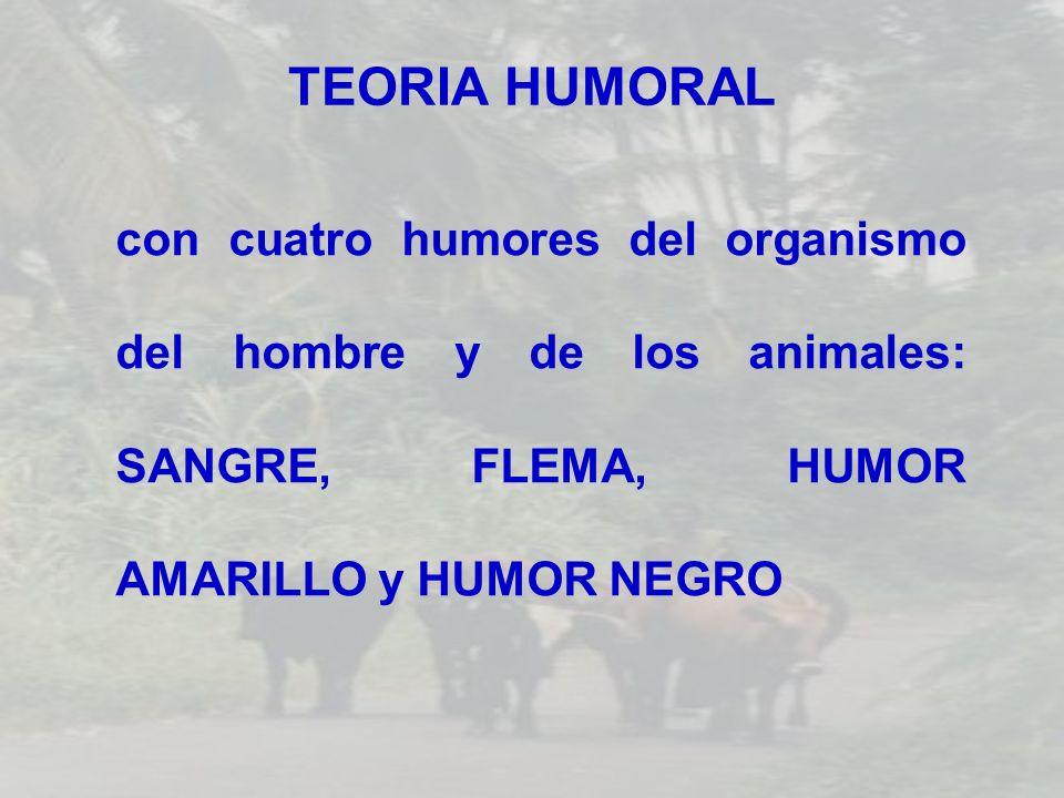 TEORIA HUMORAL con cuatro humores del organismo del hombre y de los animales: SANGRE, FLEMA, HUMOR AMARILLO y HUMOR NEGRO
