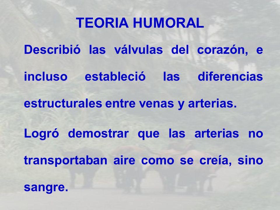 TEORIA HUMORAL Describió las válvulas del corazón, e incluso estableció las diferencias estructurales entre venas y arterias. Logró demostrar que las