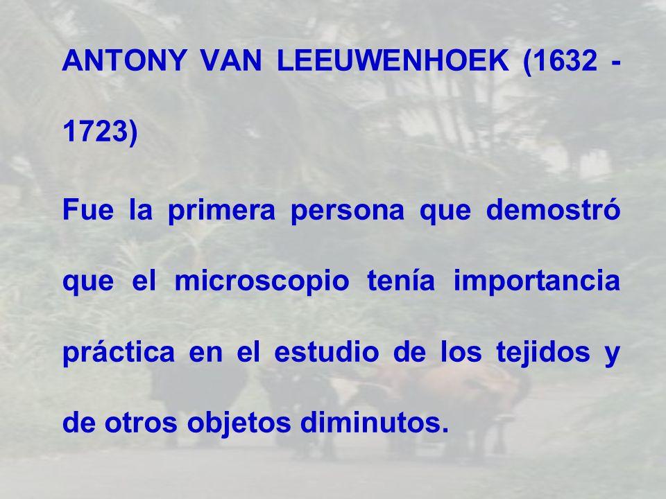 ANTONY VAN LEEUWENHOEK (1632 - 1723) Fue la primera persona que demostró que el microscopio tenía importancia práctica en el estudio de los tejidos y