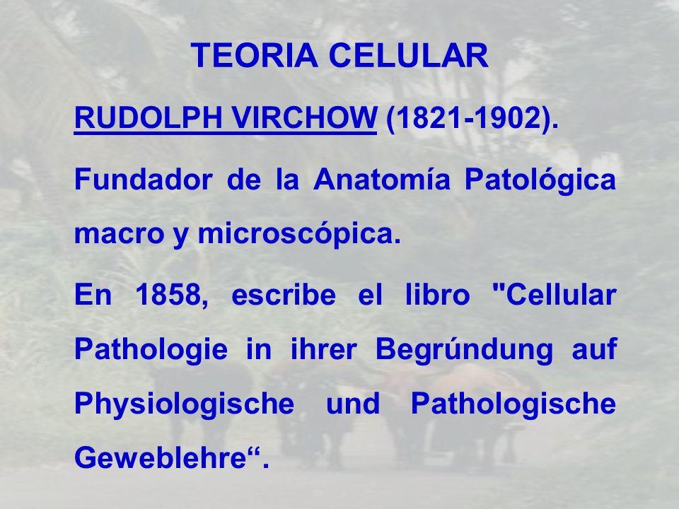 TEORIA CELULAR RUDOLPH VIRCHOW (1821-1902). Fundador de la Anatomía Patológica macro y microscópica. En 1858, escribe el libro