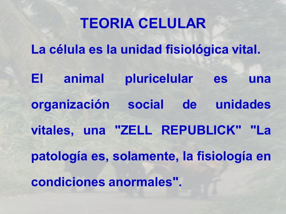 TEORIA CELULAR La célula es la unidad fisiológica vital. El animal pluricelular es una organización social de unidades vitales, una