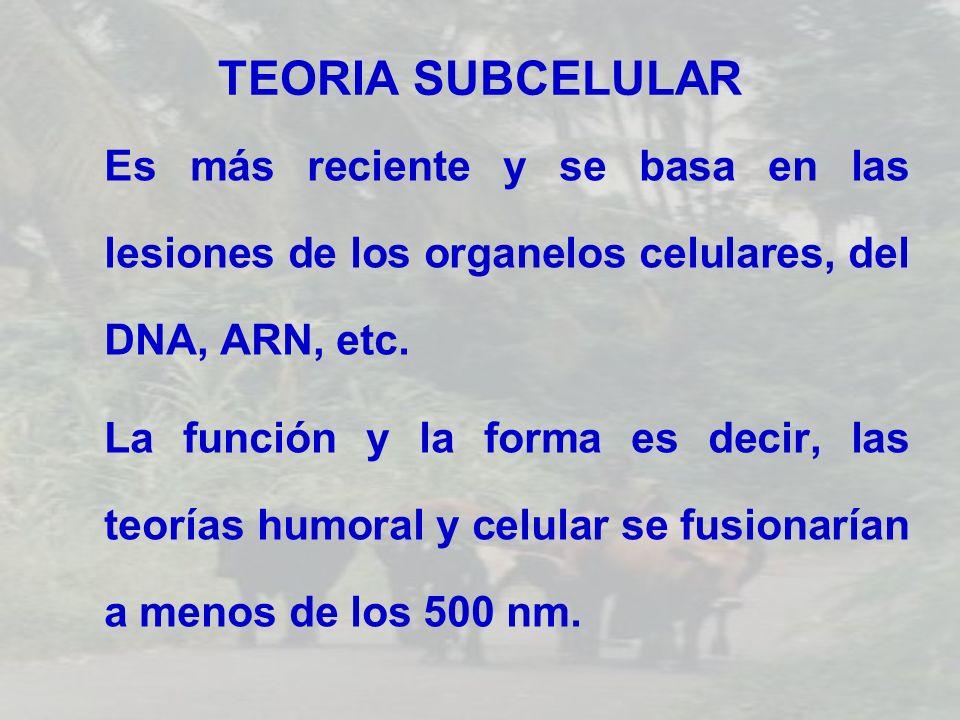 TEORIA SUBCELULAR Es más reciente y se basa en las lesiones de los organelos celulares, del DNA, ARN, etc. La función y la forma es decir, las teorías