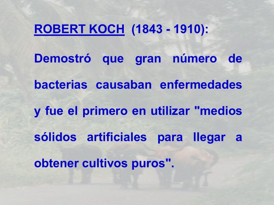ROBERT KOCH (1843 - 1910): Demostró que gran número de bacterias causaban enfermedades y fue el primero en utilizar