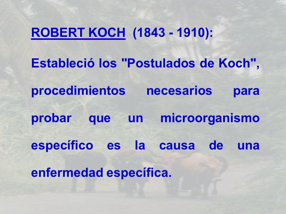 ROBERT KOCH (1843 - 1910): Estableció los