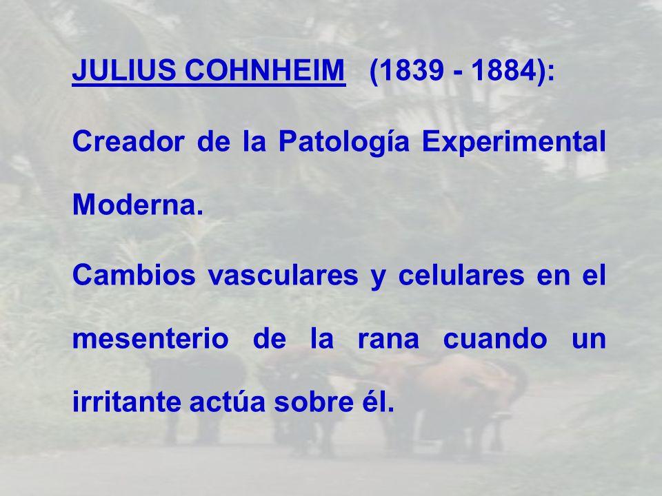 JULIUS COHNHEIM (1839 - 1884): Creador de la Patología Experimental Moderna. Cambios vasculares y celulares en el mesenterio de la rana cuando un irri