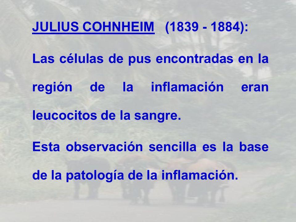 JULIUS COHNHEIM (1839 - 1884): Las células de pus encontradas en la región de la inflamación eran leucocitos de la sangre. Esta observación sencilla e