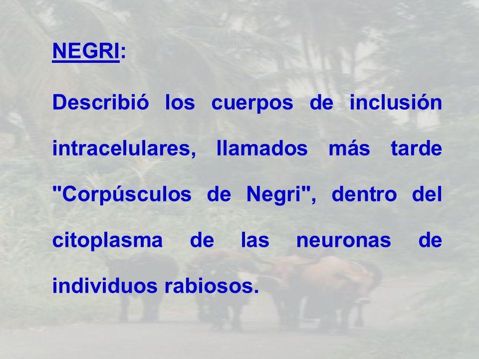 NEGRI: Describió los cuerpos de inclusión intracelulares, llamados más tarde