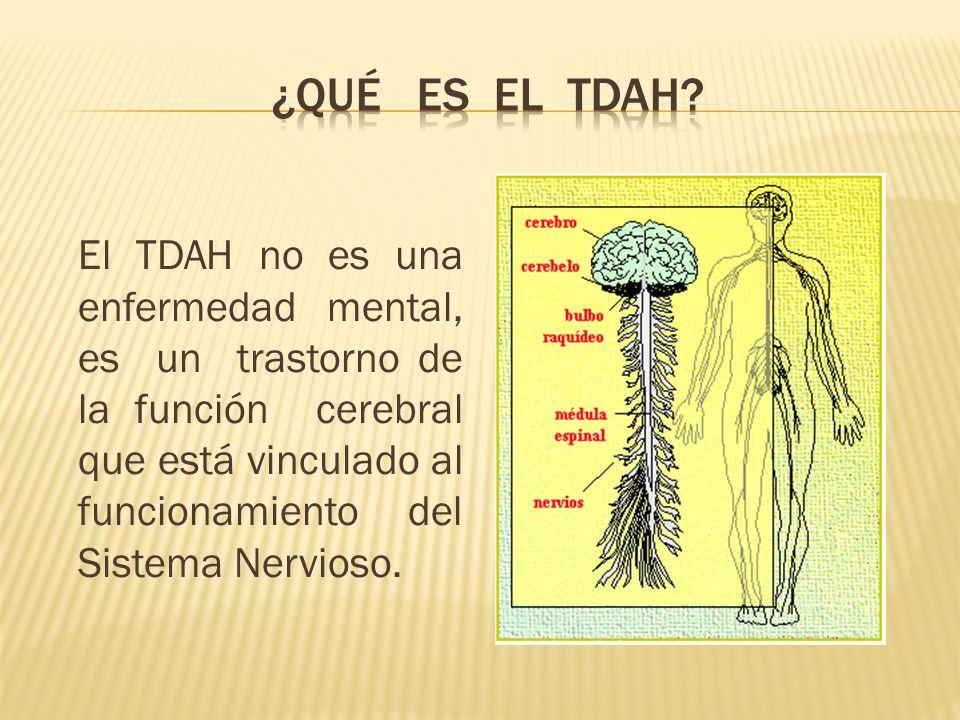 El TDAH no es una enfermedad mental, es un trastorno de la función cerebral que está vinculado al funcionamiento del Sistema Nervioso.