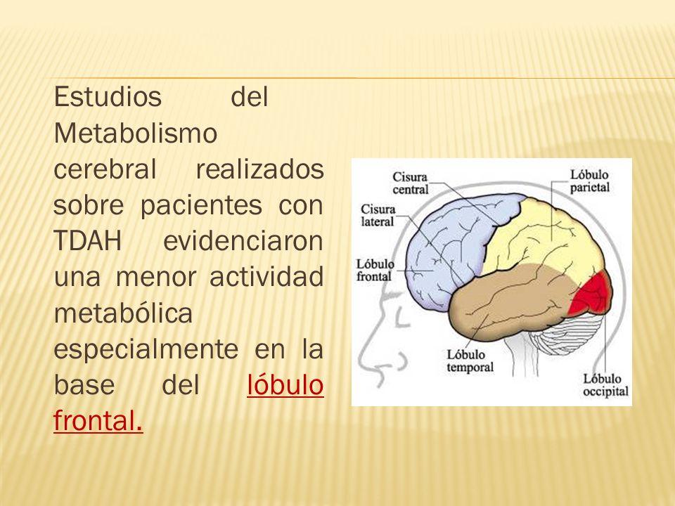 Estudios del Metabolismo cerebral realizados sobre pacientes con TDAH evidenciaron una menor actividad metabólica especialmente en la base del lóbulo