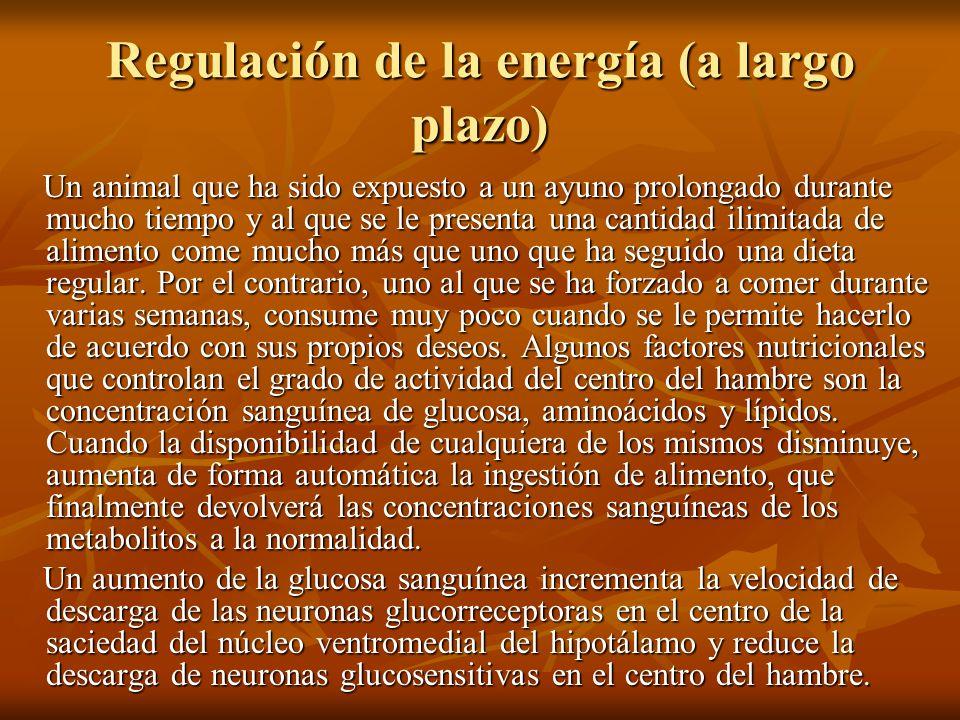 Regulación de la energía (a largo plazo) Un animal que ha sido expuesto a un ayuno prolongado durante mucho tiempo y al que se le presenta una cantida