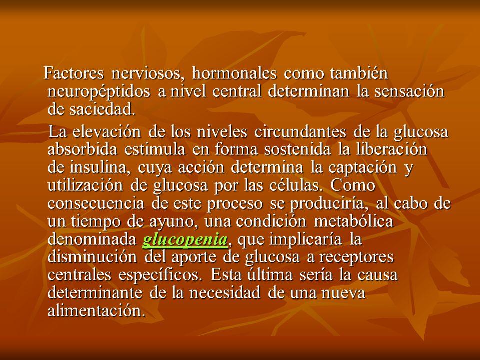 Factores nerviosos, hormonales como también neuropéptidos a nivel central determinan la sensación de saciedad. Factores nerviosos, hormonales como tam