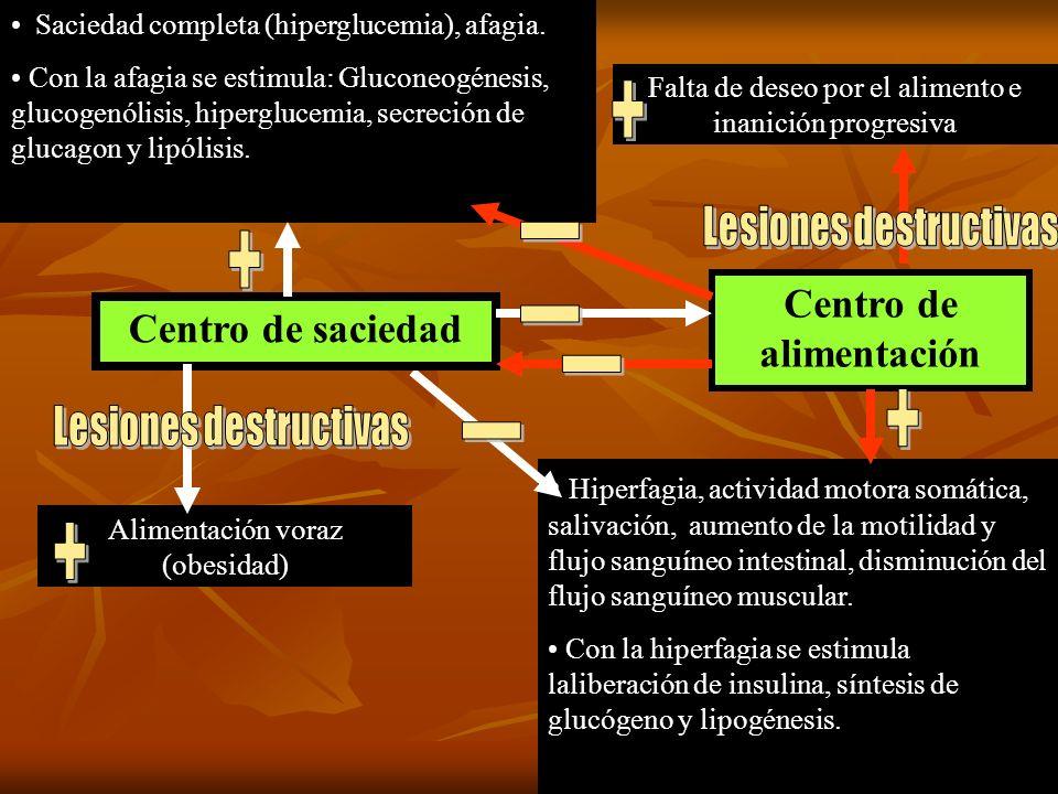 Hiperfagia, actividad motora somática, salivación, aumento de la motilidad y flujo sanguíneo intestinal, disminución del flujo sanguíneo muscular. Con