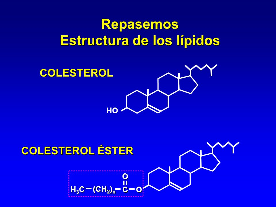 Estructura de los Lípidos C C O H H C H TRIGLICÉRIDOS C 14 -C 22 C 8 -C 12, <C 8 PUFA en posición PUFA en posición C C O H H C H O O C (CH 2 ) n O CH 3 C (CH 2 ) n O CH 3 P O R O FOSFOLÍPIDOS H H H H O O O C (CH 2 ) n O CH 3 C (CH 2 ) n O CH 3 C (CH 2 ) n O CH 3 R = colina, serina, etanolamina, inositol