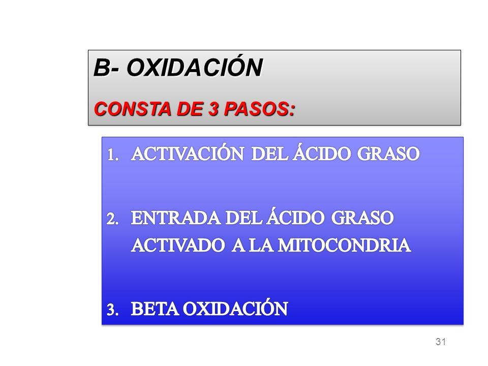 31 B- OXIDACIÓN CONSTA DE 3 PASOS: B- OXIDACIÓN CONSTA DE 3 PASOS: