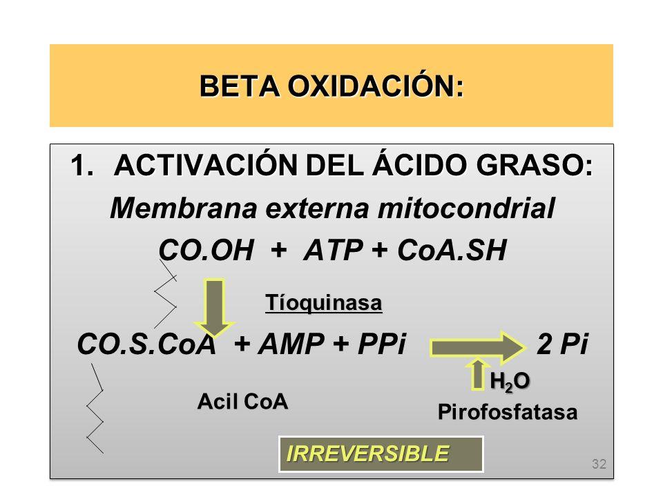 BETA OXIDACIÓN: 1.ACTIVACIÓN DEL ÁCIDO GRASO: Membrana externa mitocondrial CO.OH + ATP + CoA.SH CO.S.CoA + AMP + PPi 2 Pi 1.ACTIVACIÓN DEL ÁCIDO GRASO: Membrana externa mitocondrial CO.OH + ATP + CoA.SH CO.S.CoA + AMP + PPi 2 Pi 32 Tíoquinasa H2OH2OH2OH2O Acil CoA Pirofosfatasa IRREVERSIBLE