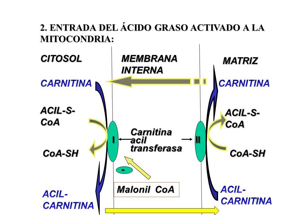 33 CITOSOL MEMBRANA INTERNA MATRIZ III Carnitina acil transferasa ACIL-S- CoA CoA-SHCoA-SH 2.