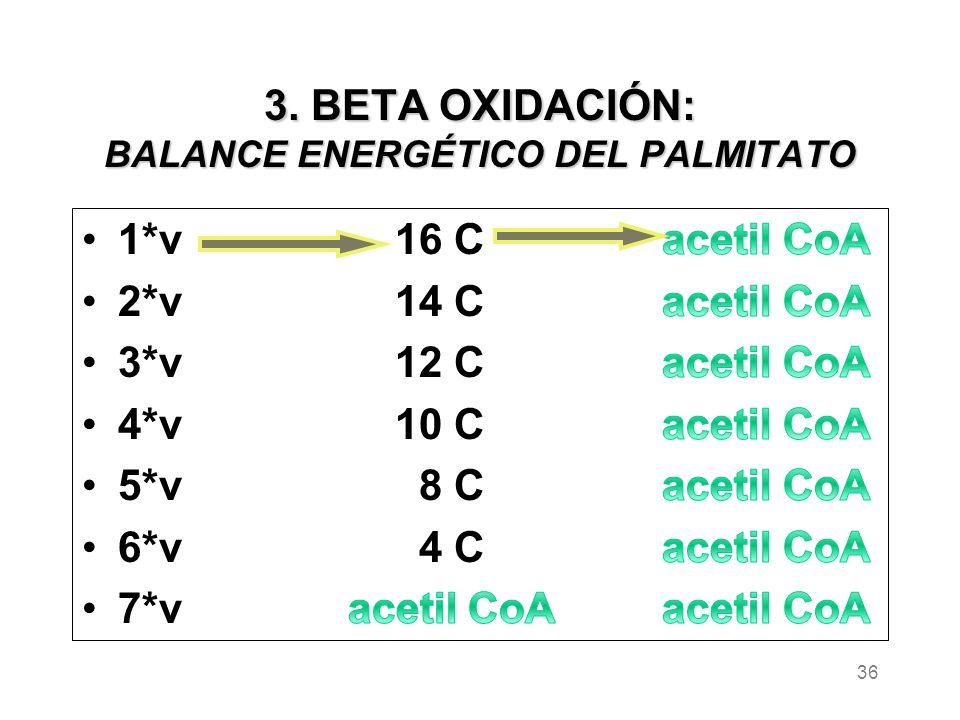 3. BETA OXIDACIÓN: BALANCE ENERGÉTICO DEL PALMITATO 36