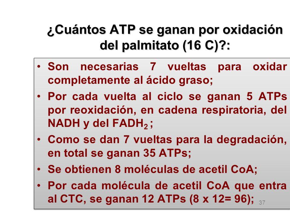 ¿Cuántos ATP se ganan por oxidación del palmitato (16 C)?: Son necesarias 7 vueltas para oxidar completamente al ácido graso; Por cada vuelta al ciclo se ganan 5 ATPs por reoxidación, en cadena respiratoria, del NADH y del FADH 2 ; Como se dan 7 vueltas para la degradación, en total se ganan 35 ATPs; Se obtienen 8 moléculas de acetil CoA; Por cada molécula de acetil CoA que entra al CTC, se ganan 12 ATPs (8 x 12= 96); Son necesarias 7 vueltas para oxidar completamente al ácido graso; Por cada vuelta al ciclo se ganan 5 ATPs por reoxidación, en cadena respiratoria, del NADH y del FADH 2 ; Como se dan 7 vueltas para la degradación, en total se ganan 35 ATPs; Se obtienen 8 moléculas de acetil CoA; Por cada molécula de acetil CoA que entra al CTC, se ganan 12 ATPs (8 x 12= 96); 37