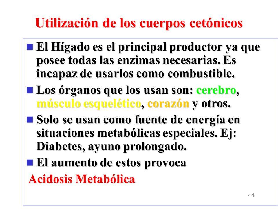 44 El Hígado es el principal productor ya que posee todas las enzimas necesarias.