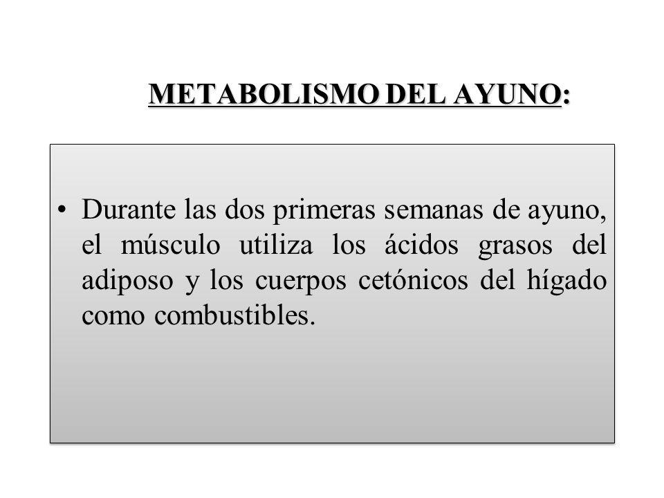 METABOLISMO DEL AYUNO: Durante las dos primeras semanas de ayuno, el músculo utiliza los ácidos grasos del adiposo y los cuerpos cetónicos del hígado como combustibles.