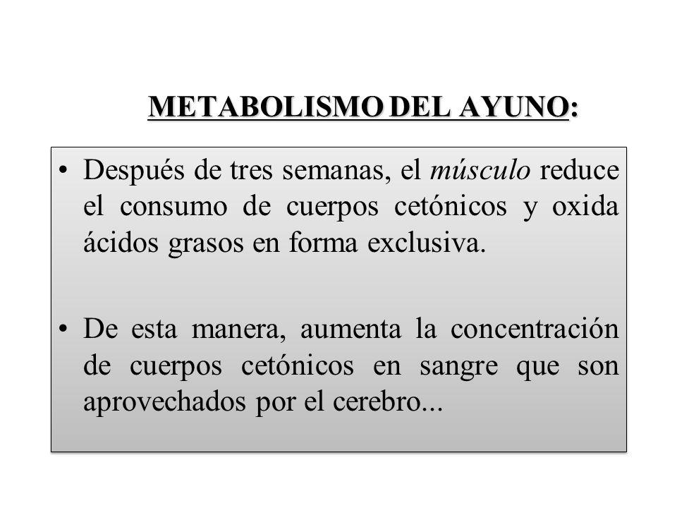 METABOLISMO DEL AYUNO: METABOLISMO DEL AYUNO: Después de tres semanas, el músculo reduce el consumo de cuerpos cetónicos y oxida ácidos grasos en forma exclusiva.