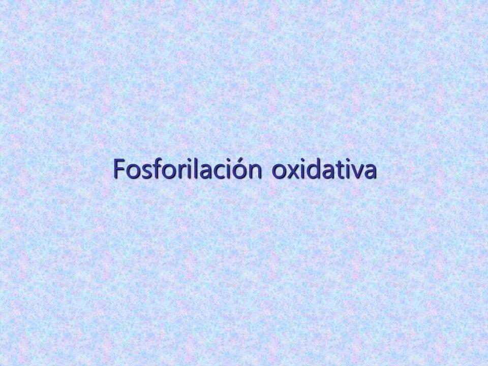 Fosforilación oxidativa