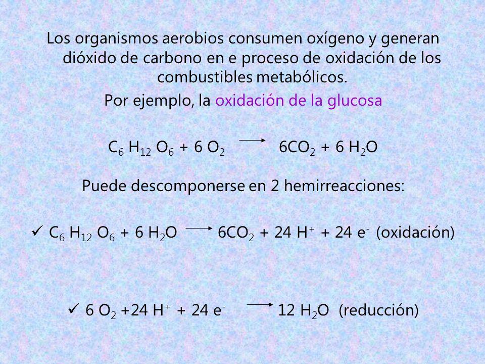 Los organismos aerobios consumen oxígeno y generan dióxido de carbono en e proceso de oxidación de los combustibles metabólicos. Por ejemplo, la oxida